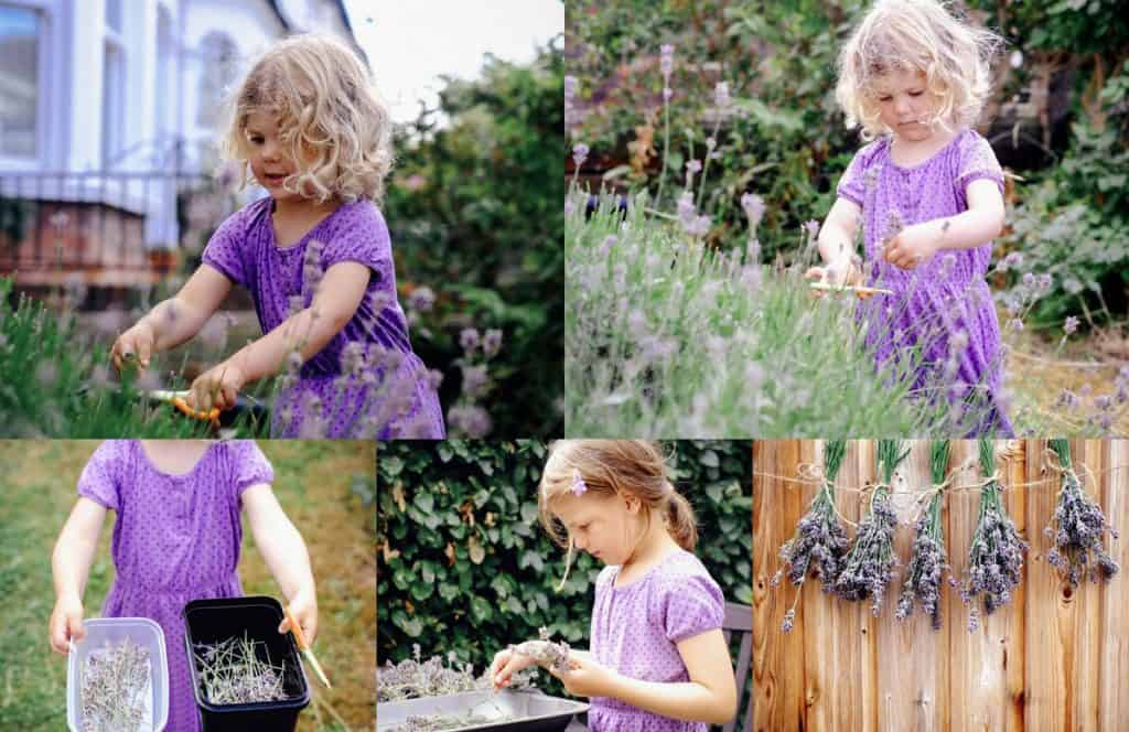 Girls cutting lavender in the garden