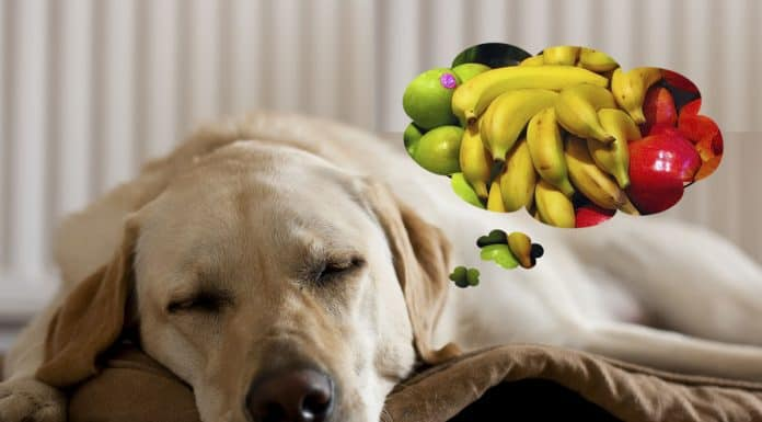 Dog dreaming about healthy fruit snacks