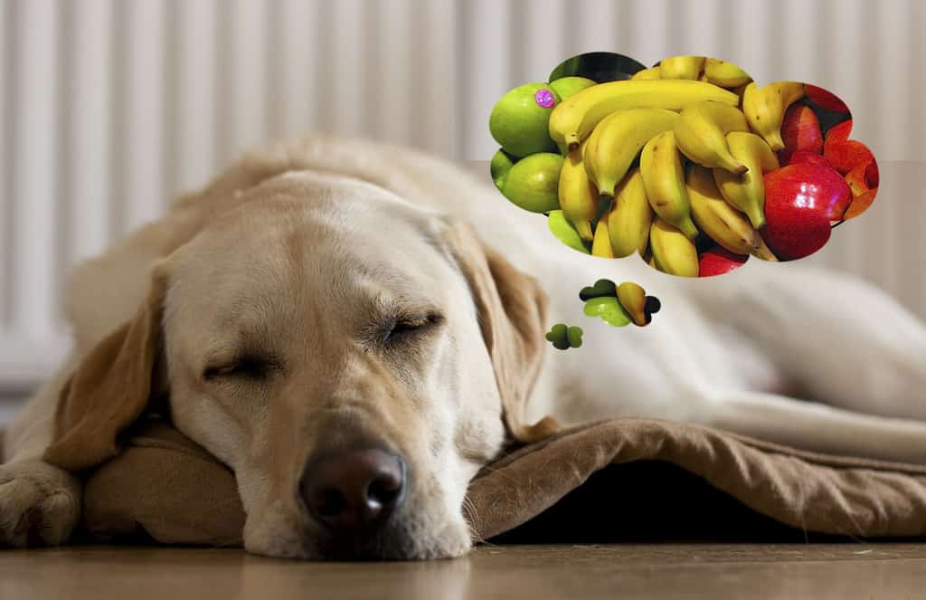 Dogs Eating Fruit And Vegetables