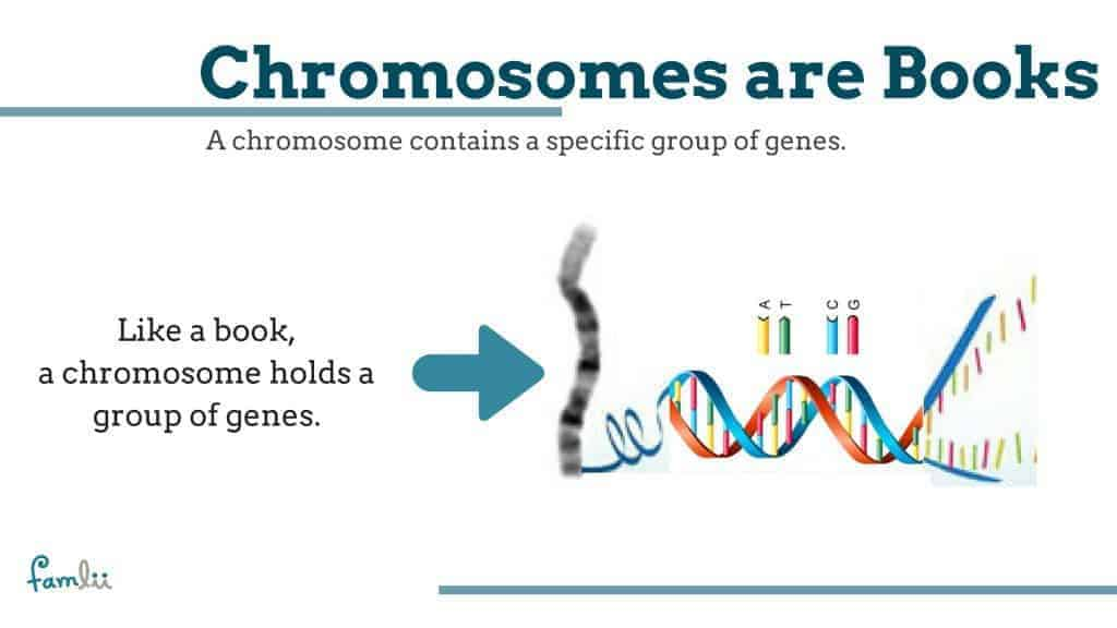 What is a chromosome graphic