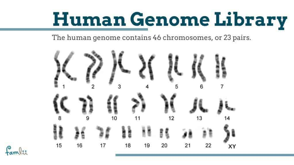 What is the human genome graphic