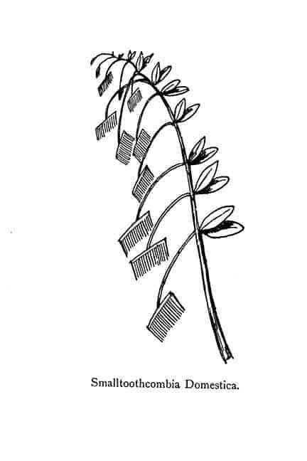 Combs Edward Lear Nonsense Botany Plant