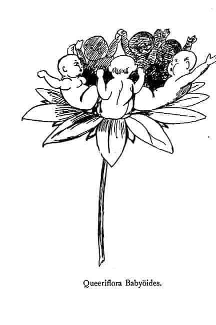 Baby Nonsense Botany