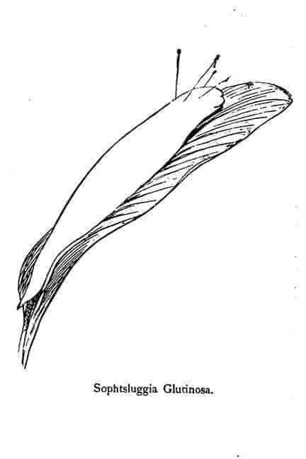 Slug plant by Lear