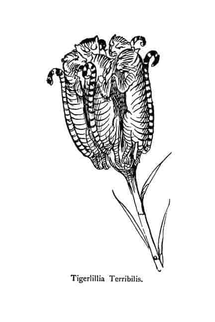 Tiger nonsense plant by Lear